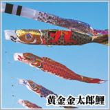 黄金金太郎鯉